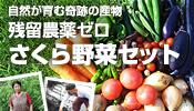 残留農薬ゼロ さくら野菜セット